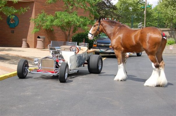 Rolla T Clydesdale